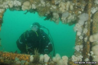 HMS Scylla become haven for marine life